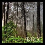 Forks Forest-twilight inspired, twilight scents,